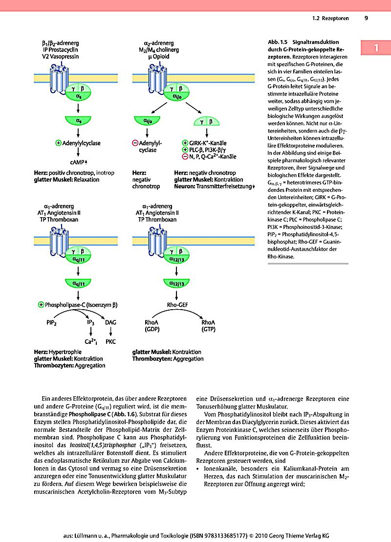 epub Elements of Molecular Neurobiology