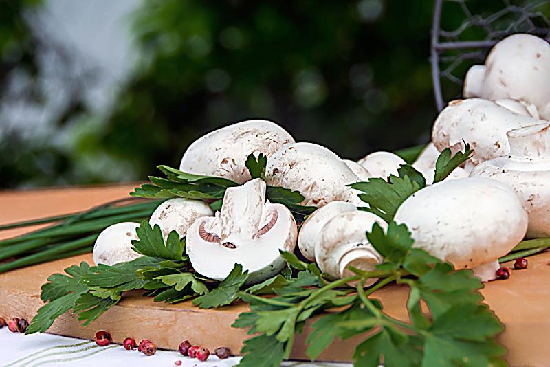 pilzgarten wei e champignons jetzt bei bestellen. Black Bedroom Furniture Sets. Home Design Ideas