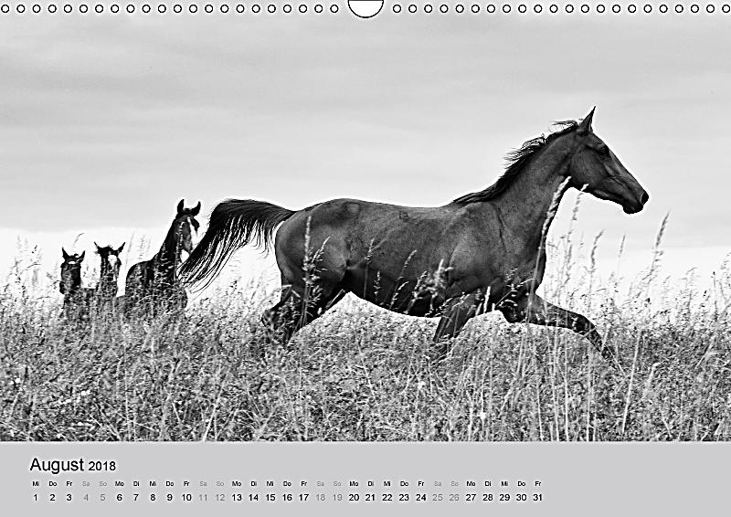 portraits de chevaux 2018 wandkalender 2018 din a3 quer kalender bestellen. Black Bedroom Furniture Sets. Home Design Ideas