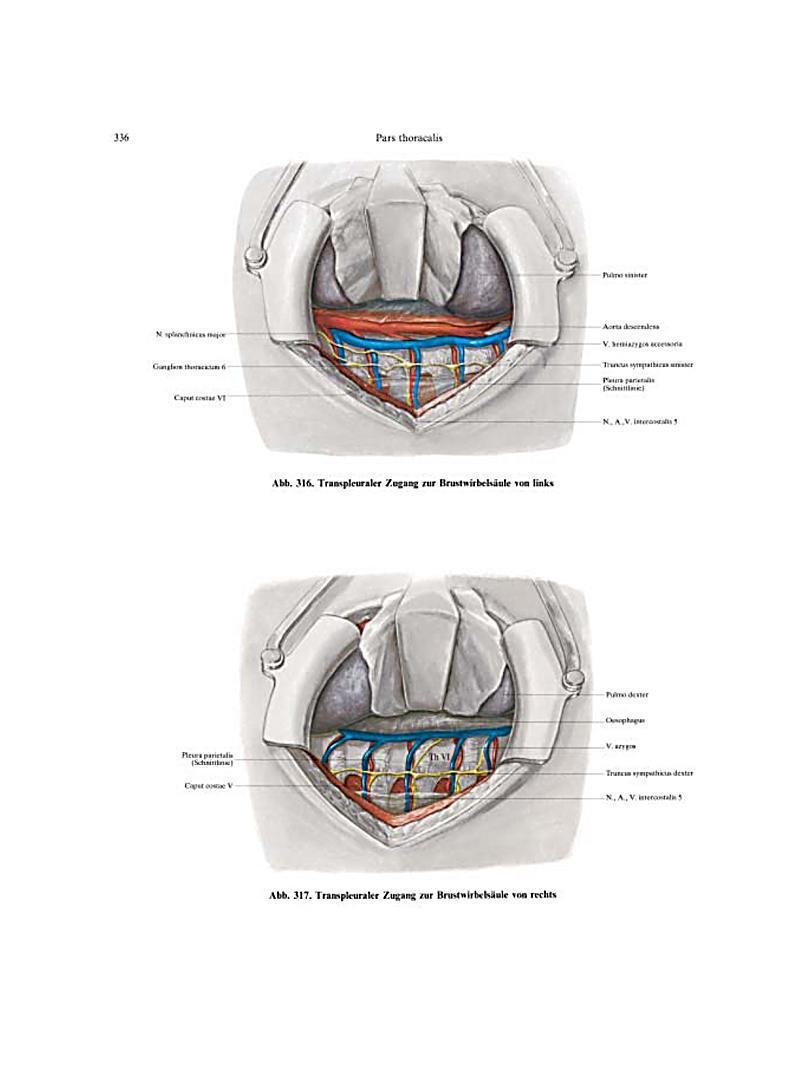 Ausgezeichnet Hals Bilder Anatomie Bilder - Menschliche Anatomie ...
