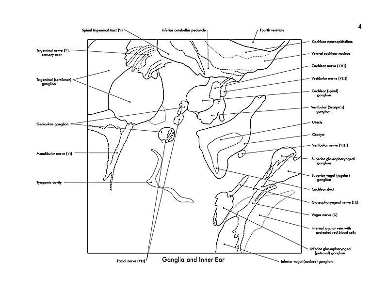 Atemberaubend Anatomie Der Maus Fotos - Menschliche Anatomie Bilder ...