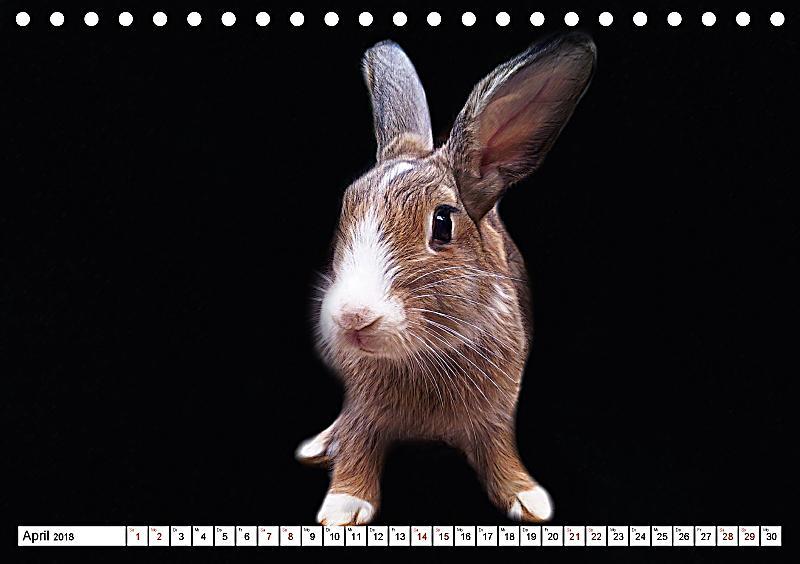 putzige kaninchen artwork tischkalender 2018 din a5 quer. Black Bedroom Furniture Sets. Home Design Ideas