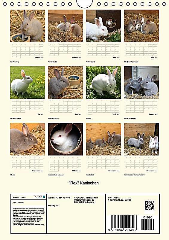 rex kaninchen wandkalender 2017 din a4 hoch kalender. Black Bedroom Furniture Sets. Home Design Ideas