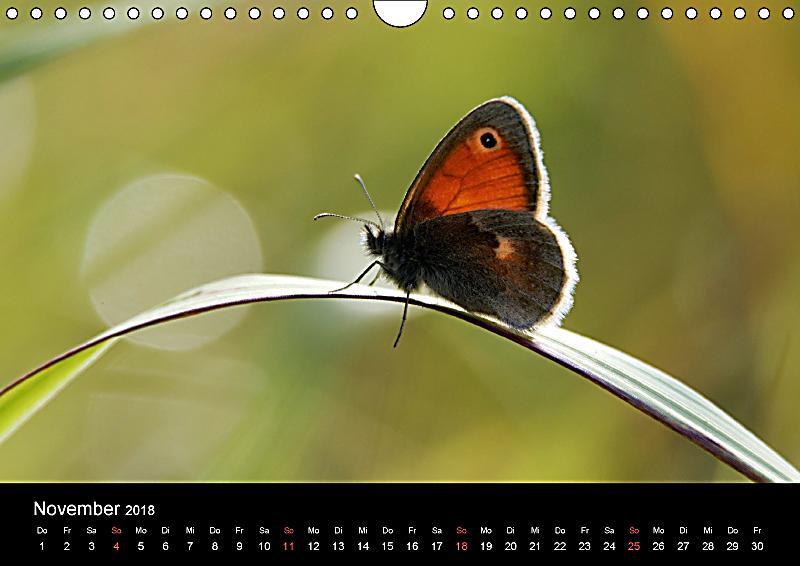 schmetterlinge in deutschland wandkalender 2018 din a4 quer kalender bestellen. Black Bedroom Furniture Sets. Home Design Ideas
