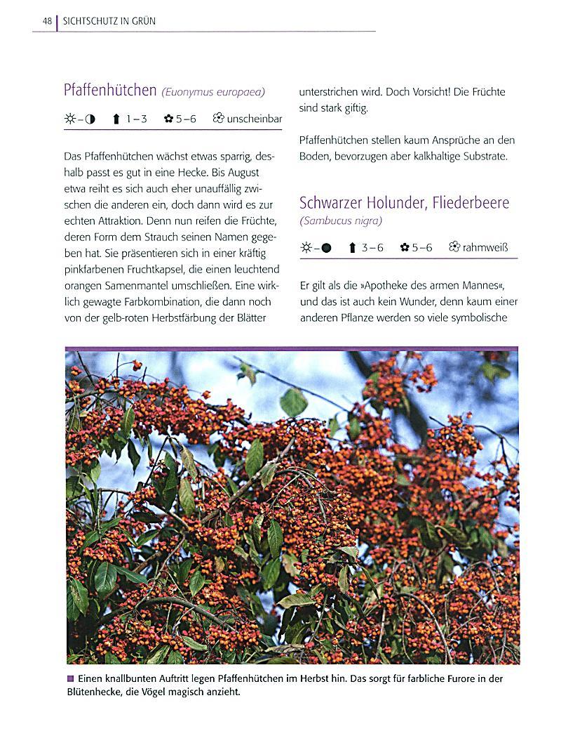 Sichtschutz Buch von Bärbel Faschingbauer portofrei Weltbild