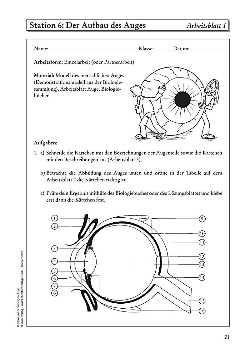 Charmant Menschliche Sinnesorgane Bilder Fotos - Menschliche ...