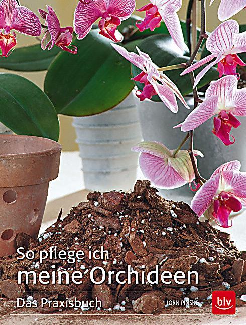 so pflege ich meine orchideen buch portofrei bei. Black Bedroom Furniture Sets. Home Design Ideas