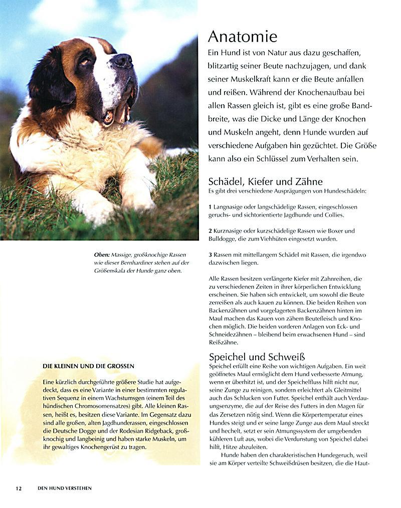 Schön Männlich Hund Anatomie Galerie - Anatomie Ideen - finotti.info