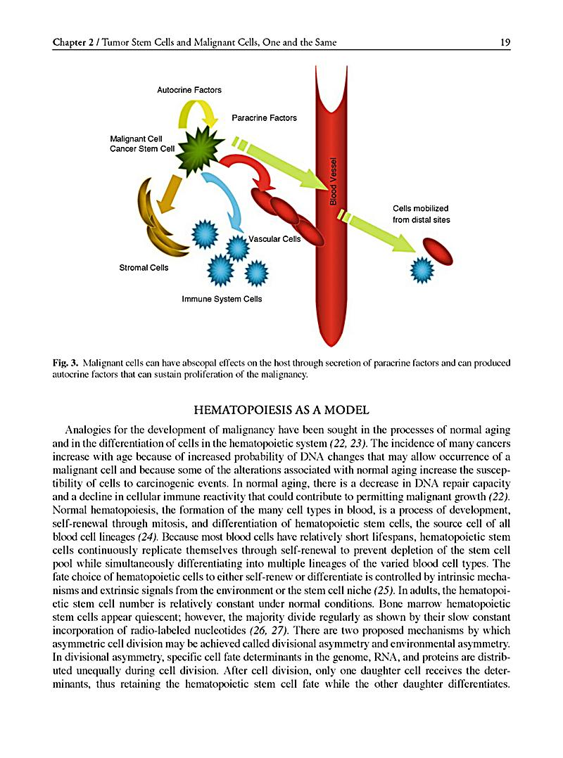 cancer stem cells essay This free health essay on essay: stem cells is perfect for health students to use as an example.