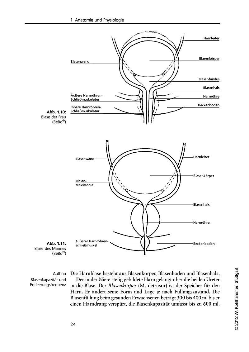 Großzügig Weibliche Blase Anatomie Diagramm Ideen - Menschliche ...