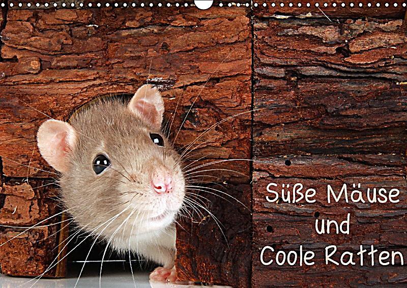 s sse m use und coole ratten wandkalender 2018 din a3 quer kalender bestellen. Black Bedroom Furniture Sets. Home Design Ideas