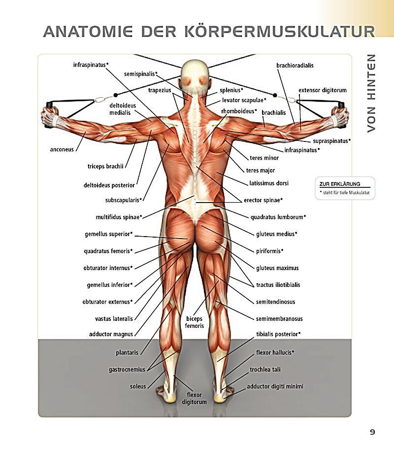 Top 5 Workout Buch von Pat Manocchia portofrei bei Weltbild.de