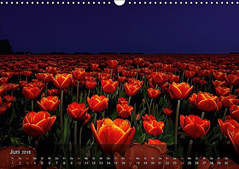 Tulpen aus holland wandkalender 2018 din a3 quer for Deko aus holland