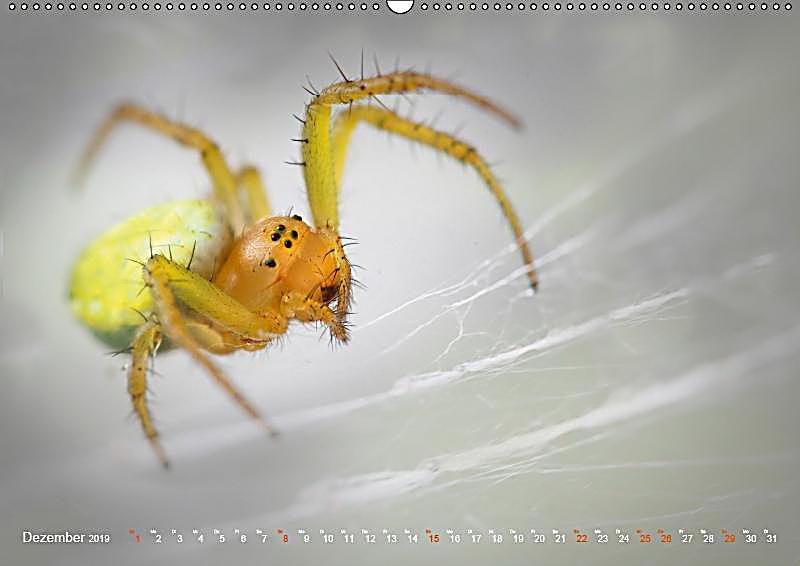 Atemberaubend Spinne Färbung Seite Galerie - Malvorlagen-Ideen ...