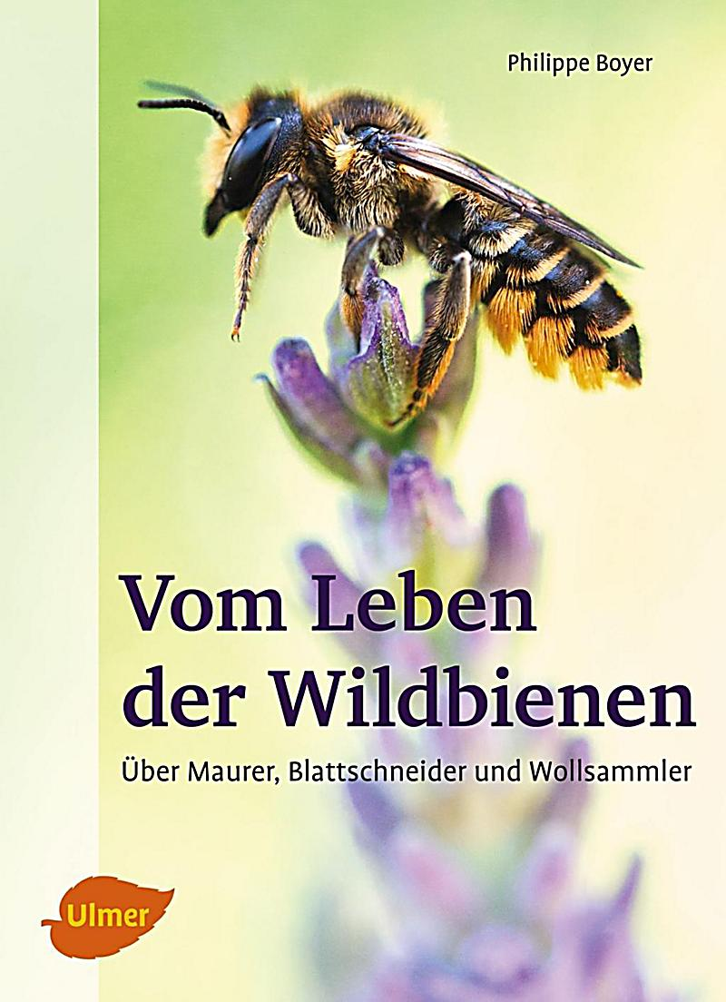 vom leben der wildbienen buch portofrei bei. Black Bedroom Furniture Sets. Home Design Ideas