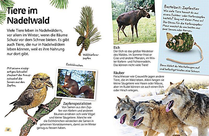 Charmant Laubwald Tiere Färbung Seiten Zeitgenössisch ...