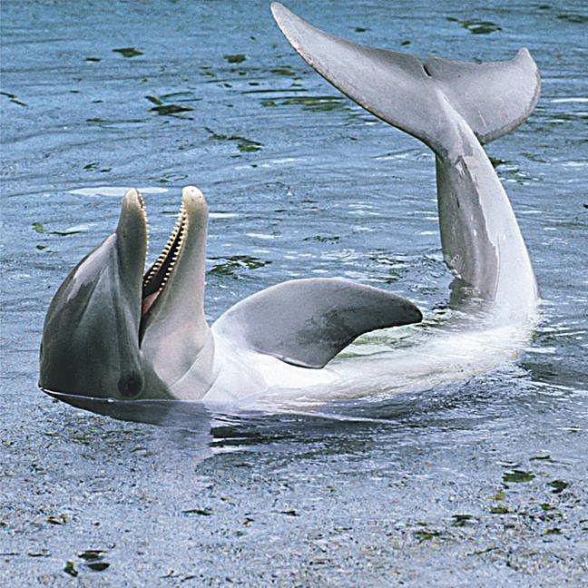 Wale Delfine
