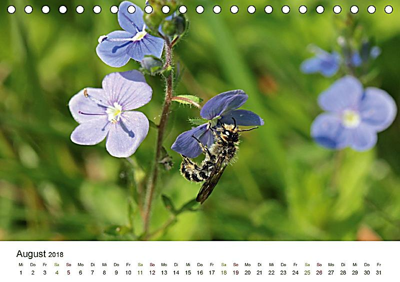 wildbienen im garten tischkalender 2018 din a5 quer dieser erfolgreiche kalender wurde dieses. Black Bedroom Furniture Sets. Home Design Ideas