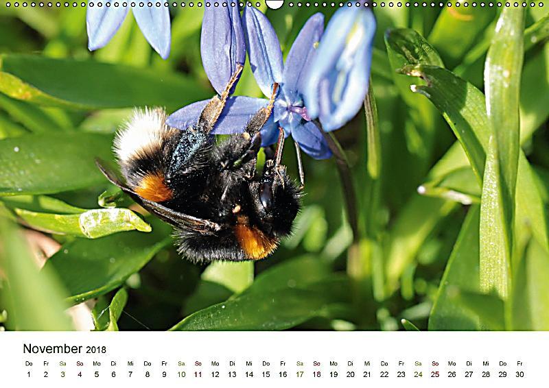 wildbienen im garten wandkalender 2018 din a2 quer dieser erfolgreiche kalender wurde dieses. Black Bedroom Furniture Sets. Home Design Ideas