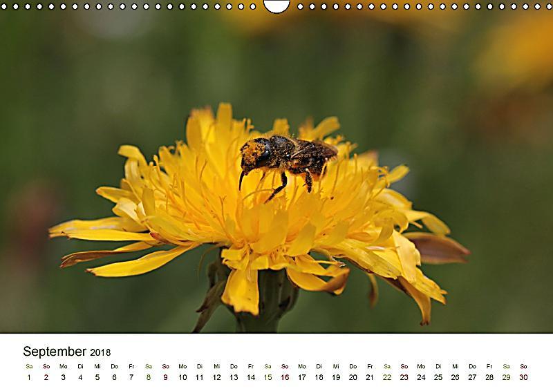 wildbienen im garten wandkalender 2018 din a3 quer dieser erfolgreiche kalender wurde dieses. Black Bedroom Furniture Sets. Home Design Ideas