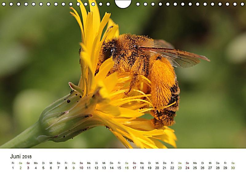 wildbienen im garten wandkalender 2018 din a4 quer dieser erfolgreiche kalender wurde dieses. Black Bedroom Furniture Sets. Home Design Ideas