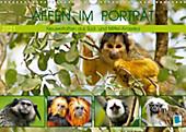 Affen im Porträt: Mittel- und Süd-Amerika (Wandkalender 2021 DIN A3 quer) - Kalender