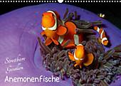 Anemonenfische - Streitbare Gesellen (Wandkalender 2020 DIN A3 quer) - Kalender - Ute Niemann,