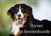 Berner Sennenhunde (Tischkalender 2017 DIN A5 quer)