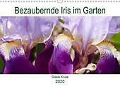 Bezaubernde Iris im Garten (Wandkalender 2020 DIN A3 quer) - Kalender - Gisela Kruse,