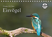 Eisvögel (Tischkalender 2017 DIN A5 quer)