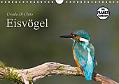 Eisvögel (Wandkalender 2017 DIN A4 quer)
