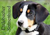 Entlebucher Sennenhund (Wandkalender 2017 DIN A3 quer)