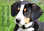 Entlebucher Sennenhund (Wandkalender 2017 DIN A4 quer)