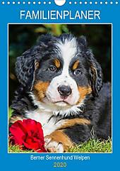Familienplaner Berner Sennenhund Welpen (Wandkalender 2020 DIN A4 hoch) - Kalender - Sigrid Starick,