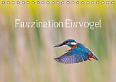 Faszination Eisvogel (Tischkalender 2017 DIN A5 quer)