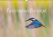 Faszination Eisvogel (Wandkalender 2017 DIN A3 quer)