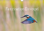 Faszination Eisvogel (Wandkalender 2017 DIN A4 quer)