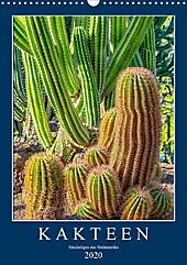 Kakteen - Stacheliges aus Südamerika (Wandkalender 2020 DIN A3 hoch) - Kalender - Dieter Meyer,
