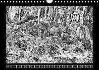 Afrika Schwarz - Weiss (Wandkalender 2018 DIN A4 quer) - Produktdetailbild 6