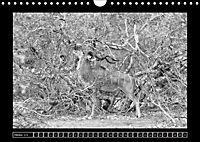 Afrika Schwarz - Weiss (Wandkalender 2018 DIN A4 quer) - Produktdetailbild 10