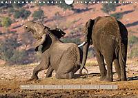 Afrikas Tierwelt - Wilde Elefanten (Wandkalender 2018 DIN A4 quer) Dieser erfolgreiche Kalender wurde dieses Jahr mit gl - Produktdetailbild 3