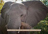 Afrikas Tierwelt - Wilde Elefanten (Wandkalender 2018 DIN A4 quer) Dieser erfolgreiche Kalender wurde dieses Jahr mit gl - Produktdetailbild 2