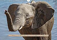 Afrikas Tierwelt - Wilde Elefanten (Wandkalender 2018 DIN A4 quer) Dieser erfolgreiche Kalender wurde dieses Jahr mit gl - Produktdetailbild 5