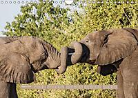 Afrikas Tierwelt - Wilde Elefanten (Wandkalender 2018 DIN A4 quer) Dieser erfolgreiche Kalender wurde dieses Jahr mit gl - Produktdetailbild 8