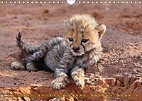 Afrikas wildes Kinderzimmer (Wandkalender 2018 DIN A4 quer) Dieser erfolgreiche Kalender wurde dieses Jahr mit gleichen - Produktdetailbild 3