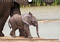 Afrikas wildes Kinderzimmer (Wandkalender 2018 DIN A4 quer) Dieser erfolgreiche Kalender wurde dieses Jahr mit gleichen - Produktdetailbild 1