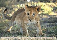 Afrikas wildes Kinderzimmer (Wandkalender 2018 DIN A4 quer) Dieser erfolgreiche Kalender wurde dieses Jahr mit gleichen - Produktdetailbild 6