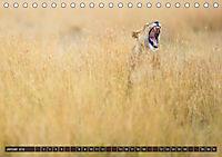Auf Safari in Kenia 2018 (Tischkalender 2018 DIN A5 quer) - Produktdetailbild 1