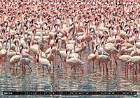 Auf Safari in Kenia 2018 (Tischkalender 2018 DIN A5 quer) - Produktdetailbild 5