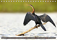 Auf Safari in Kenia 2018 (Tischkalender 2018 DIN A5 quer) - Produktdetailbild 8